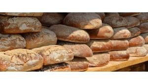 Enzyme – Chemie im Brot oder Körper aus der Balance?